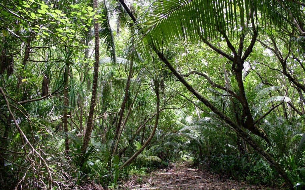 Casse tete bordelais - la loi de la jungle