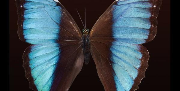 Padlock - butterfly