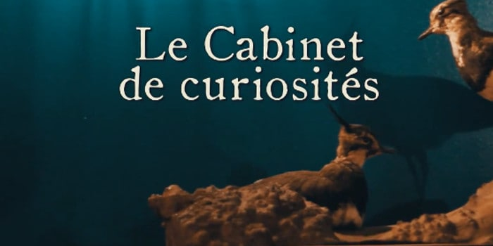 Escape Yourself - cabinet de curiosite