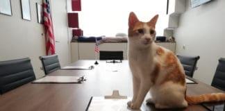 Le triangle - la planète des chats