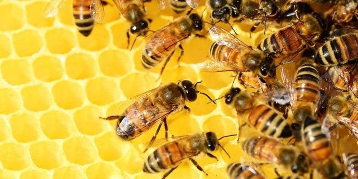 l'enigmus - enquete pour sa majeste des abeilles