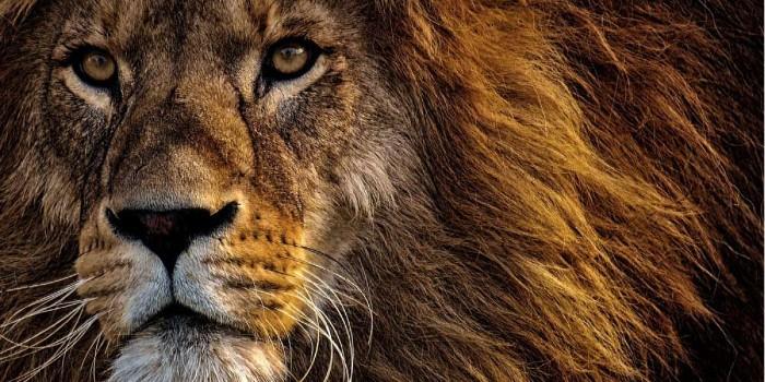 l'enigmus - le grand safari